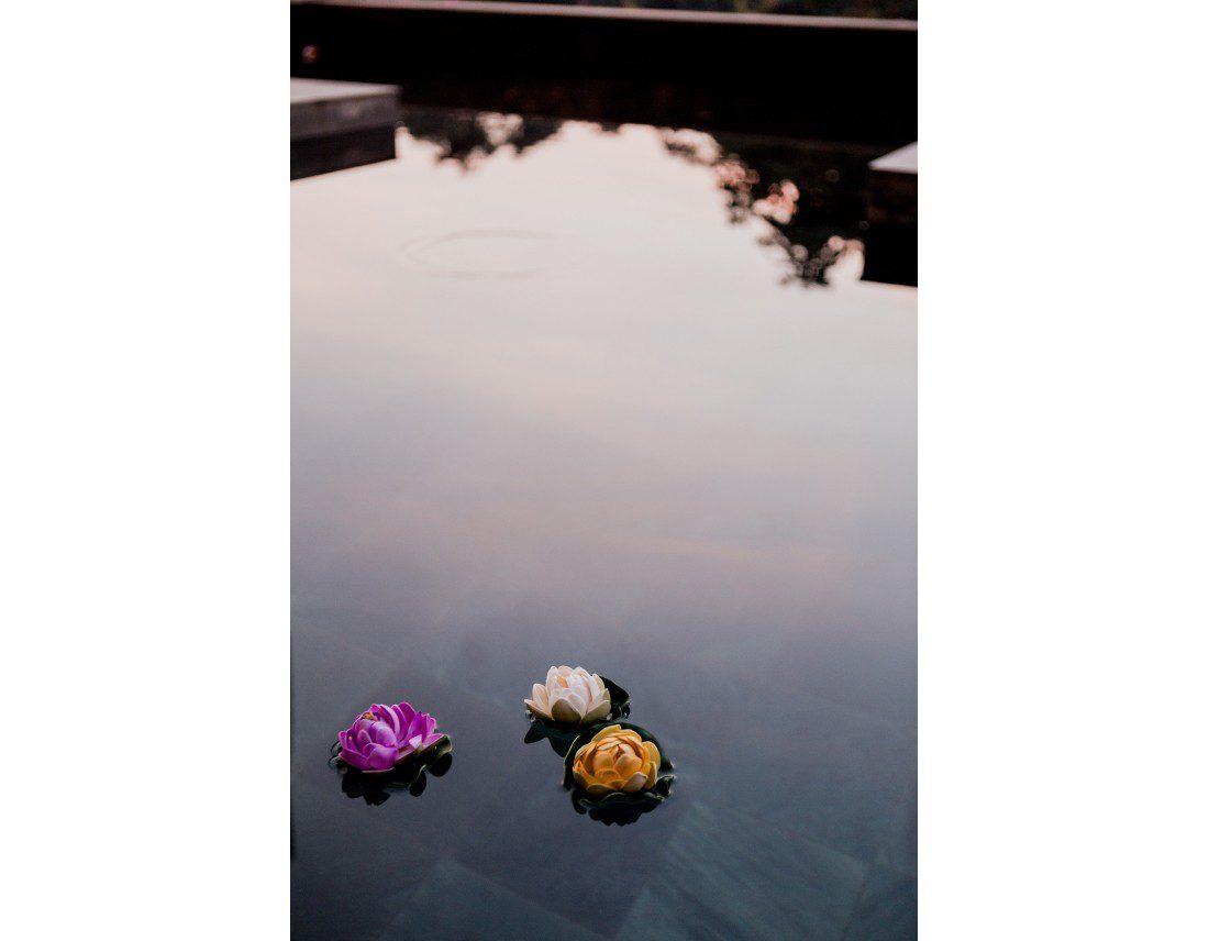 Trois fleurs de lotus dans une piscine.